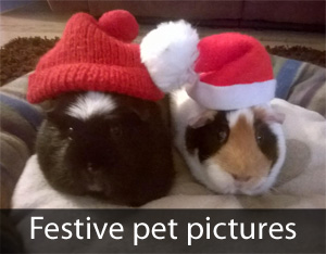 York Press: Christmas pet pictures