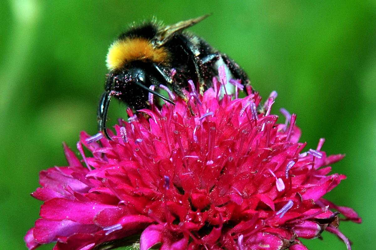 We need to talk about bees...   York Press