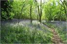 Help plant a new community woodland in York