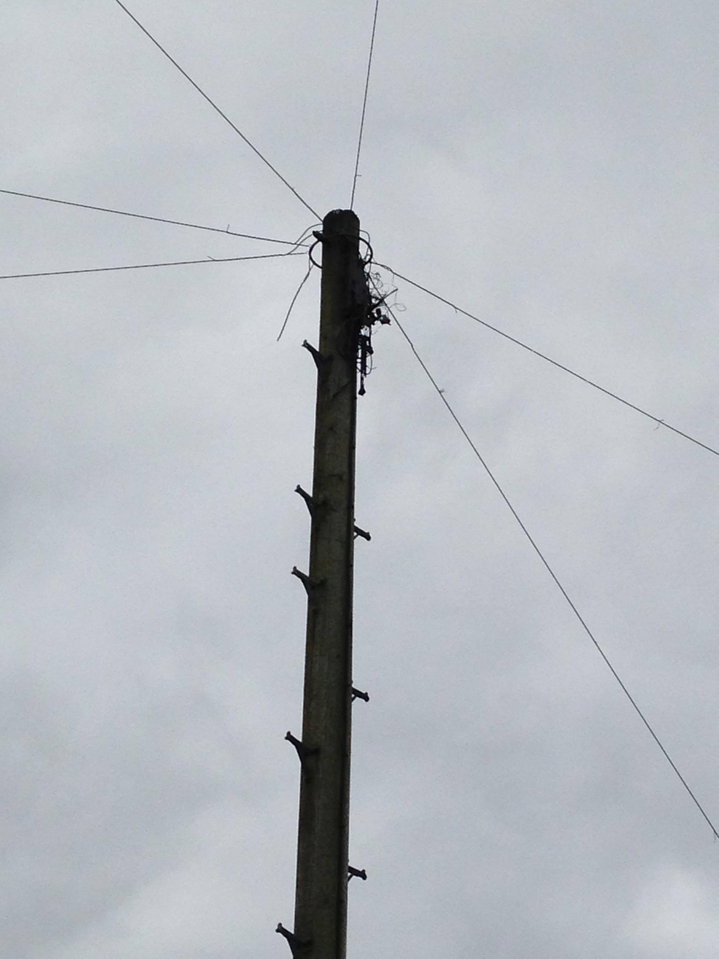 Driver crashes into telegraph pole in Willand   York Press