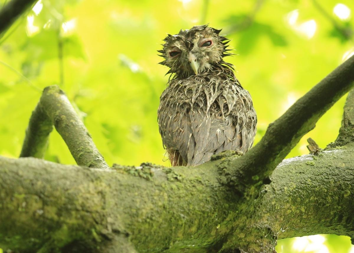 wet and wild life of the owlet york press