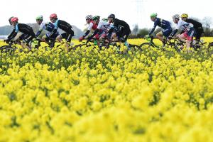 The peloton makes it way through the Yorkshire countryside during last year's Tour de Yorkshire. Picture: Alex Broadway/SWpix.com