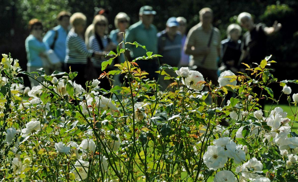 New floral festival to bloom in york next summer york press new floral festival to bloom in york next summer izmirmasajfo