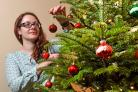 Robynne Eller puts the finishing touches to the family christmas tree at Goddards the family home of the Terry family.Pic Nigel Holland
