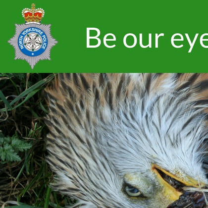 New hotline to fight birds of prey persecution