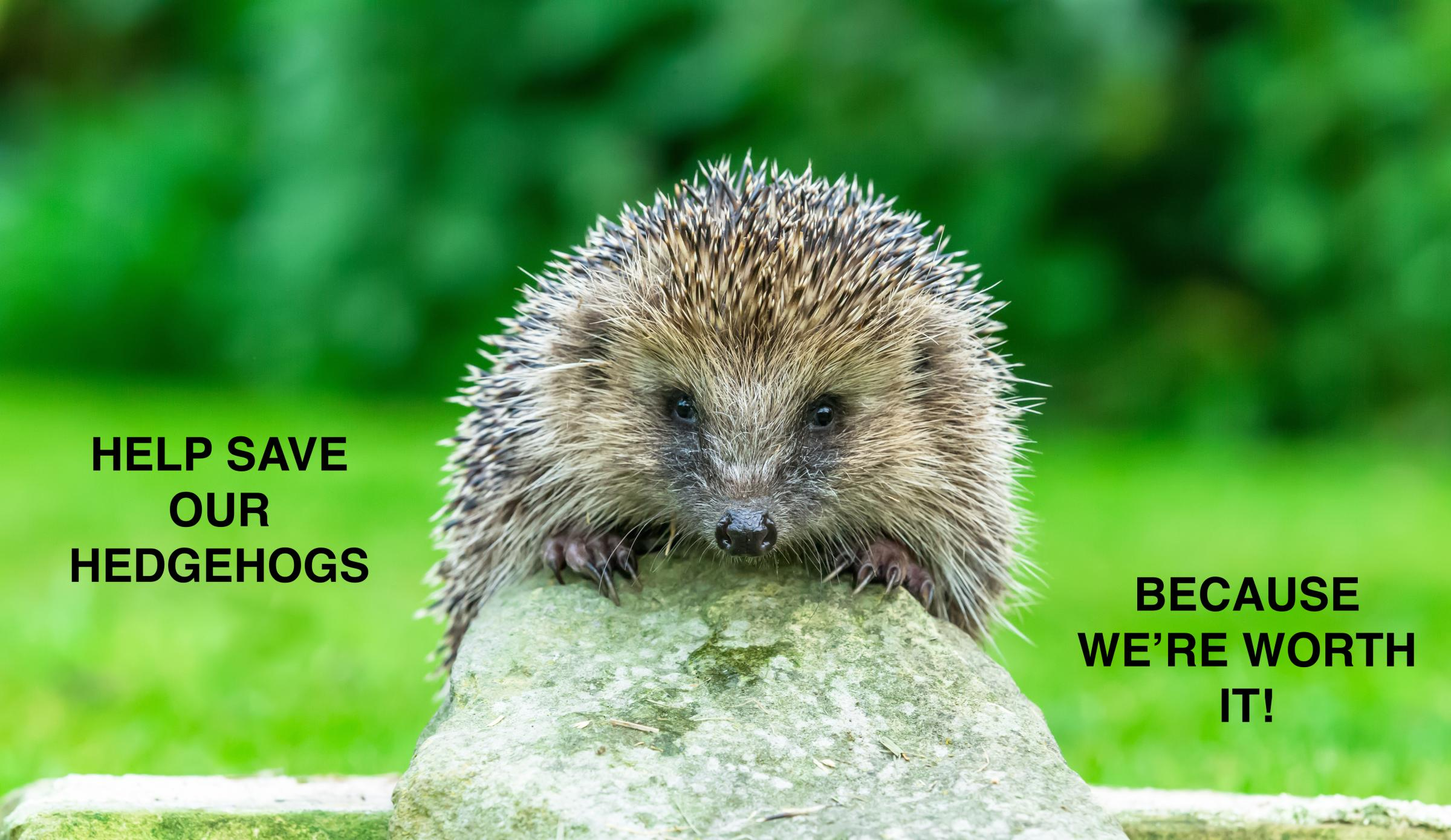 Help our Hedgehogs, because we're Worth it.