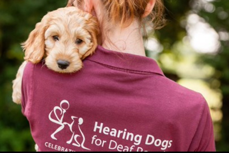 Find out about Hearing Dogs for Deaf People