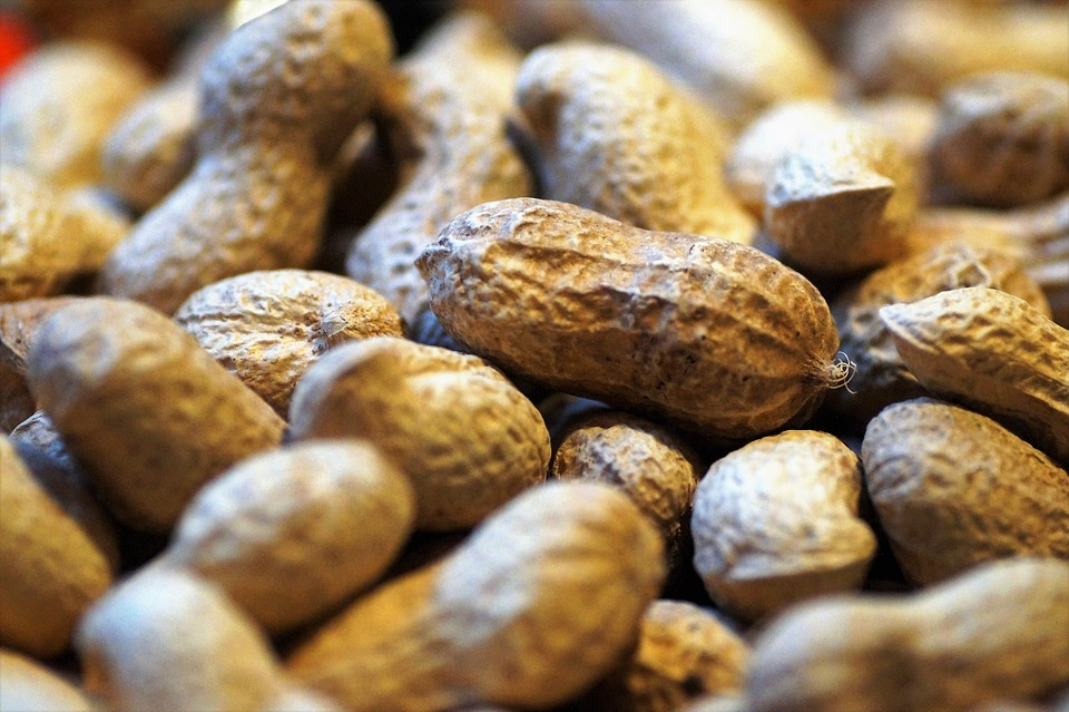 Peanut allergy sufferers have fresh hope