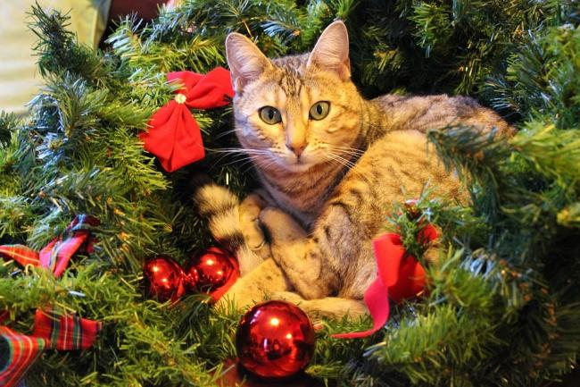 Pet owners are being warned about some of the dangers to animals over the festive period.