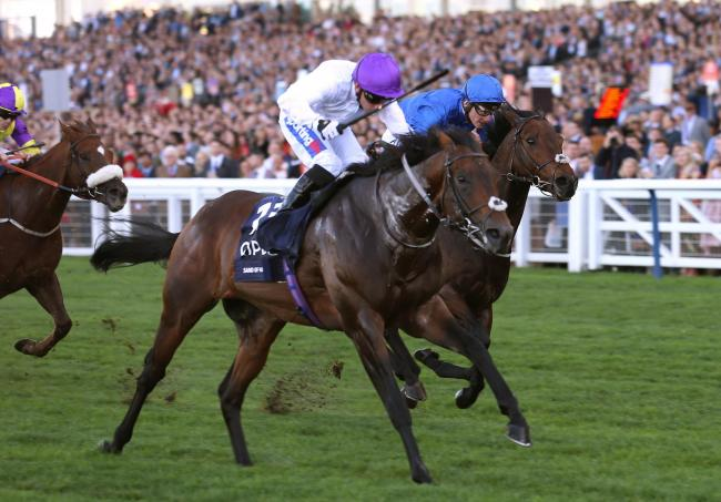 MALI MAGIC: Sands Of Mali, ridden by Paul Hanagan, wins The QIOPCO British Champion Sprint Stakes at Ascot in October. Picture: Julian Herbert/PA Wire