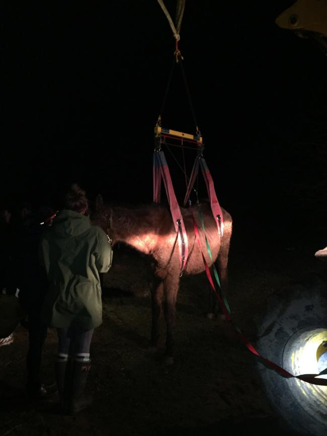 The horse that was rescued. Picture: North Yorkshire Fire and Rescue Service