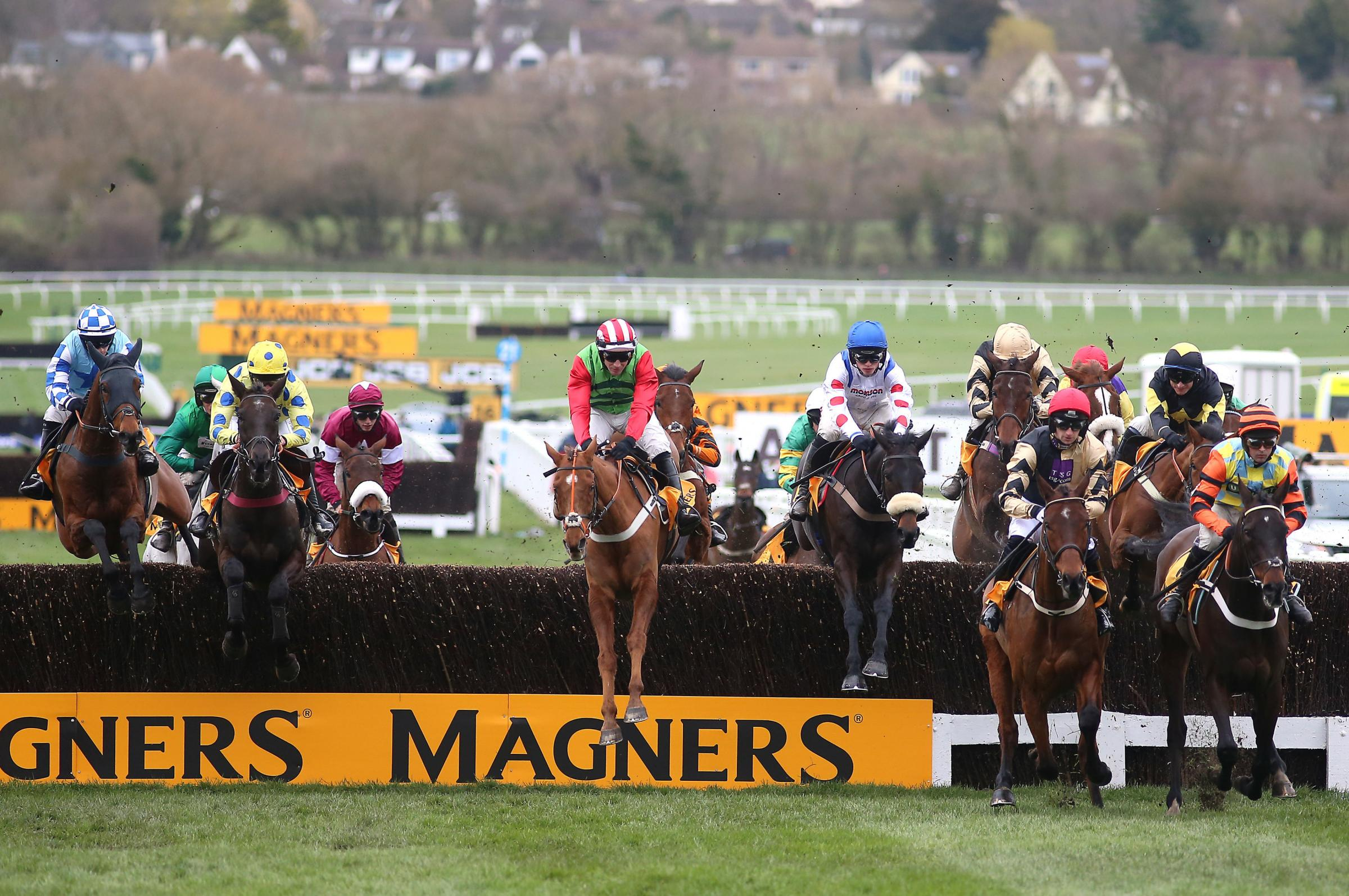UNLUCKY: Definitly Red ridden by Danny Cook (centre) during the Magners Cheltenham Gold Cup Chase on Friday - before he was brought down at the 10th fence