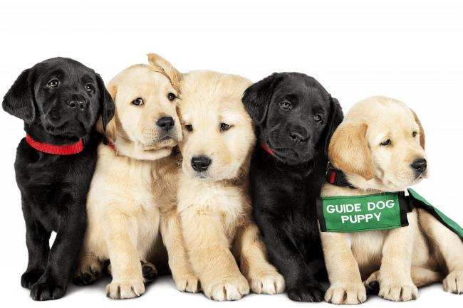 Top dogs: who will be the Pick Of The Litter in canine documentary at City Screen?